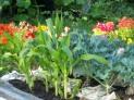 Vegetable & Herb Gardens.